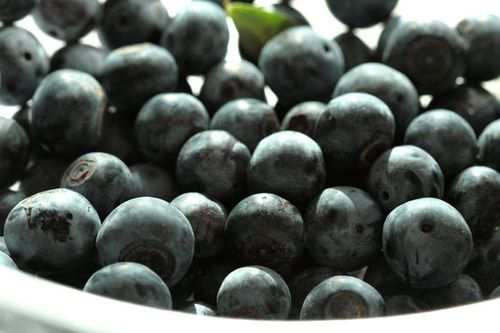 Blueberries bleuets myrtille mirtilo