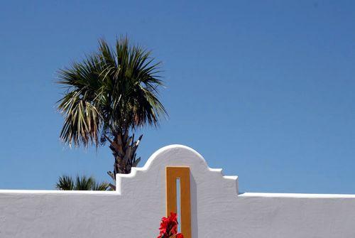 Palm blue sky palmier ciel bleu