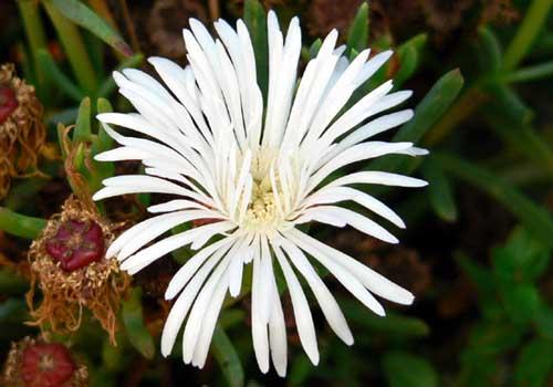 White_flower_fleur_blanche