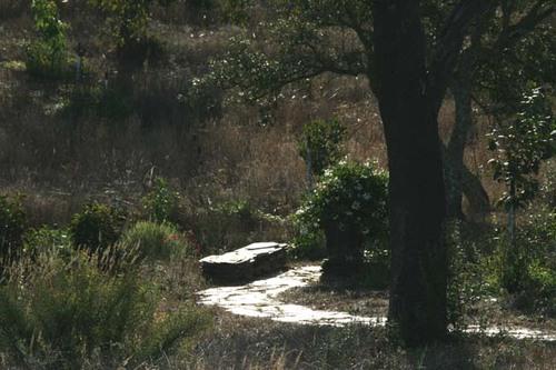 Lake_path_chemin_du_lac