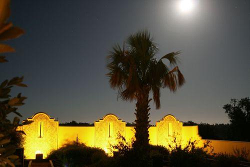 Moon lit palmtree palmier lune