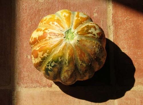Melon_ananas