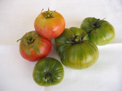 Tomates_r_v