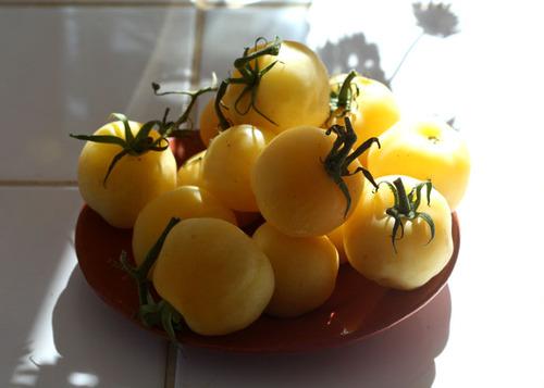 Yellow_tomato_tomate_jaune