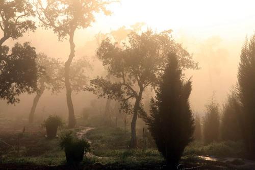 Morning_walk_chemin_dann_kenny