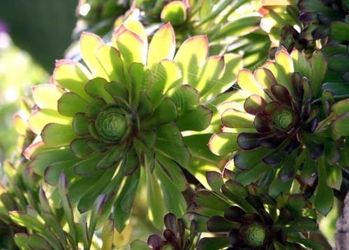 Succulente_05_07_2