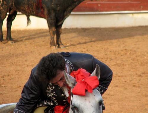 Rui_salvador_remercie_son_cheval