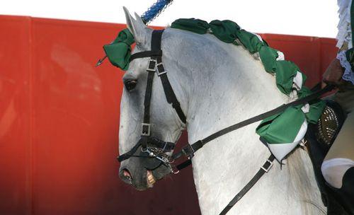 Horse cavalo cheval