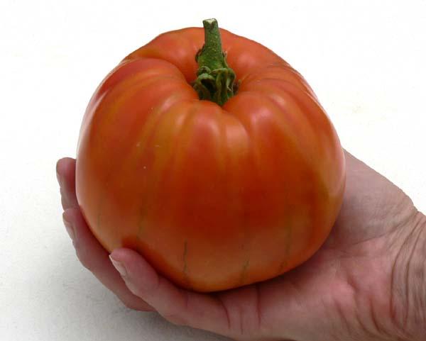 15 graines de tomate coeur de boeuf rouge seed ebay - Planter des tomates coeur de boeuf ...