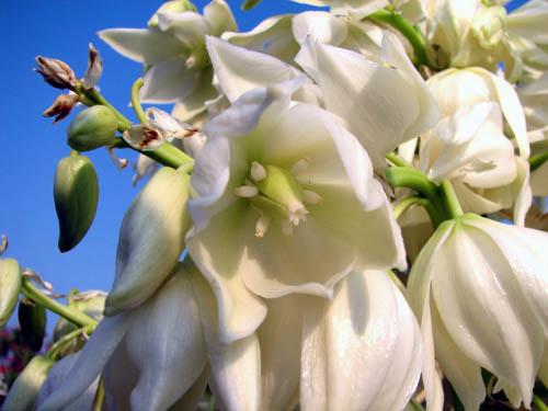 Petales De Yucca A La Creme La Cuisine Du Jardin