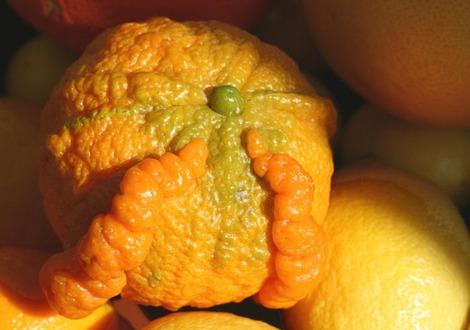Citrus_mutation