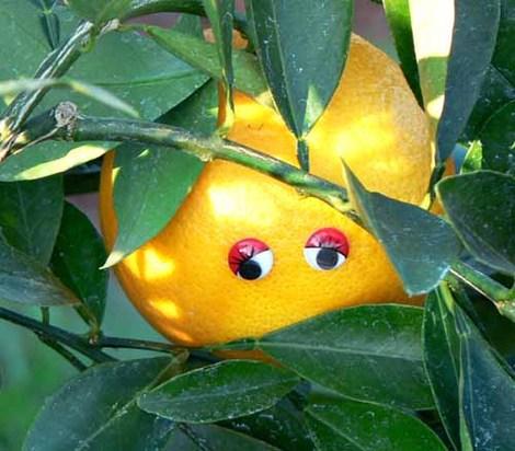 Orange_laranja