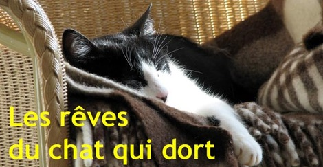 Sleeping_cat_chat_qui_dort